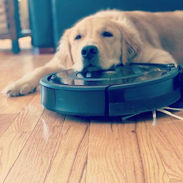 Знам, че домашният ти любимец ще се влюби в нашите прахосмукачки-роботи. Въпреки това Roomba е създадена, за да чисти подове и да създава домашен уют. И го прави съвършено добре. Увери се на irobot.bg